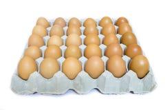 Eggs in the cardboard Stock Photo