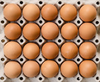 Eggs on cardboard Royalty Free Stock Photo