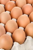 Eggs in cardboard tray Stock Image
