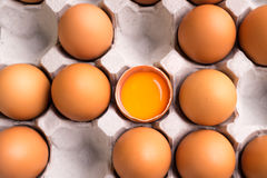 Eggs on cardboard tray Stock Images