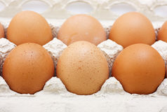 Eggs in a carton Royalty Free Stock Image