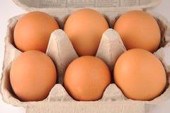 Eggs in a carton. Photograph of eggs taken in a egg carton shot in studio Royalty Free Stock Images