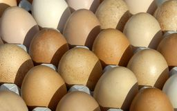 Eggs in a carton Stock Photography