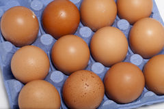 Eggs in carton basket. Brown eggs in blue carton basket Stock Images