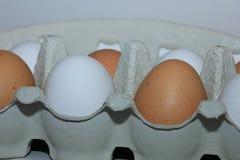 Eggs in a carton box Royalty Free Stock Photo