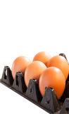 Eggs in carton box on white background Stock Image