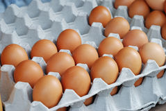 Eggs in carton Stock Images