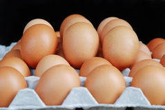 Eggs in carton Stock Image