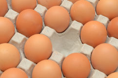 Eggs in a carton closeup view Royalty Free Stock Photo