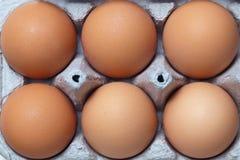 Eggs in a carton. Grouping of six brown eggs in a carton Royalty Free Stock Photos
