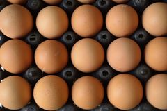 Eggs. Carton of eggs, includes clipping path royalty free stock photo