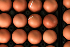 Eggs in carton. Eggs in a carton , see on top view stock photo