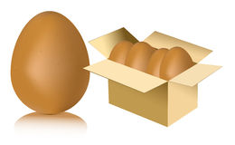 Eggs in carton white background Royalty Free Stock Photo