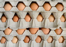 Eggs in cartons Stock Photography
