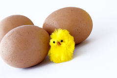 Eggs and chick Royalty Free Stock Images