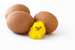 Eggs and chick royalty free stock photo