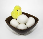 Eggs and Chick in a Brown Bowl Royalty Free Stock Images