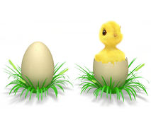 Eggs and chicken. Easter eggs hatched chicken and grass on a white background Royalty Free Stock Images