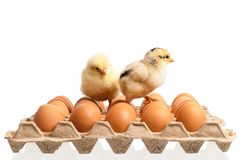 Eggs and chicken Stock Photo