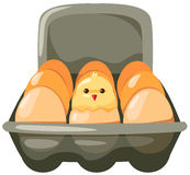 Eggs and chicken in carton. Illustration of isolated eggs and chicken in carton on white Stock Images