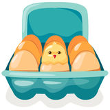 Eggs and chicken in carton. Illustration of isolated eggs and chicken in carton on white Royalty Free Stock Images