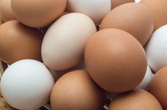 Eggs are chicken. Close-up royalty free stock photo