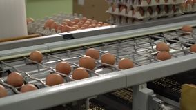 Egg factory chicken packaging stock video
