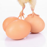 Eggs and chicken legs Stock Image