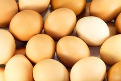 Eggs. Chicken eggs are much texture Stock Photography
