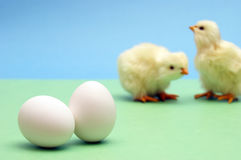 Eggs and Chicks Royalty Free Stock Photos