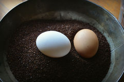 Eggs in Coffee Grounds. A pail with coffee grounds and one white egg and one brown egg sitting in it at Old World Wisconsin.  Swedish egg coffee is made by Royalty Free Stock Images