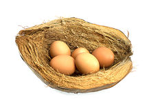 Eggs on coir Royalty Free Stock Photos