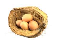 Eggs on coir Royalty Free Stock Images