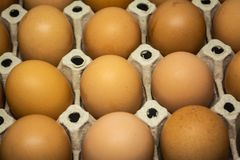 Eggs for cooking many types of food for all human being. To good healthy stock images