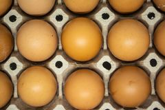 Eggs for cooking many types of food for all human being. To good healthy royalty free stock photos