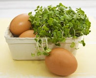 Eggs and cress (Lepidium sativum) Stock Photography