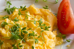 Eggs with cress Stock Photography