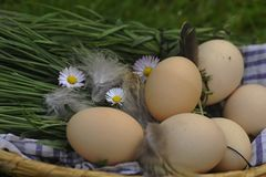 Eggs. With daisies in the scuttle Stock Images