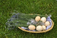 Eggs. With daisies in the scuttle Royalty Free Stock Image
