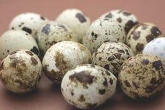 Eggs des cailles Image libre de droits