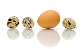 Eggs of different types of close-up Royalty Free Stock Image