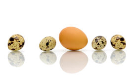 Eggs of different types on a white background Stock Photo