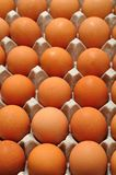 Eggs displayed in a container. In a kitchen Royalty Free Stock Photography