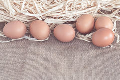Eggs on dry grass Stock Photography