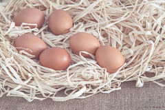 Eggs on dry grass Royalty Free Stock Image