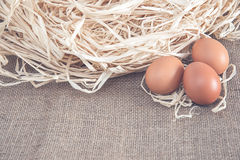 Eggs on dry grass Stock Photos