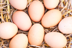Eggs on dry straw. Royalty Free Stock Image