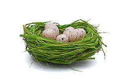 Eggs in Easter Nest royalty free stock photos