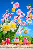 Eggs easter in row on straw with peach blossom Royalty Free Stock Image
