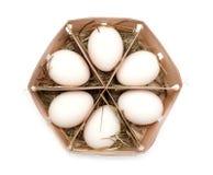 Eggs in eco box. Stock Image